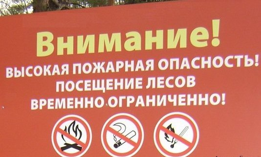 В Волгоградской области продлено ограничение на посещение лесов